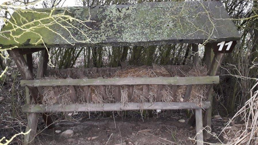 Piękna Gmina. Sarny na polach w Wielowsi