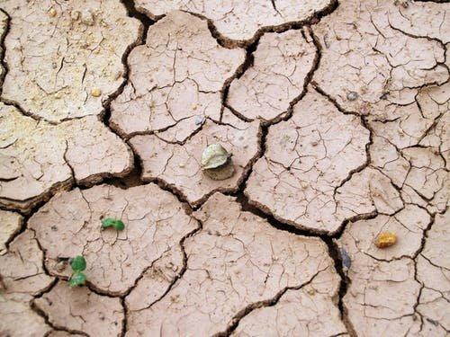 Szacowanie strat powstałych na skutek suszy